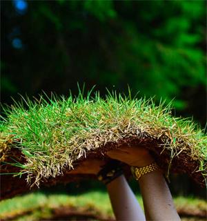 Como plantar Grama Esmeralda preço m2
